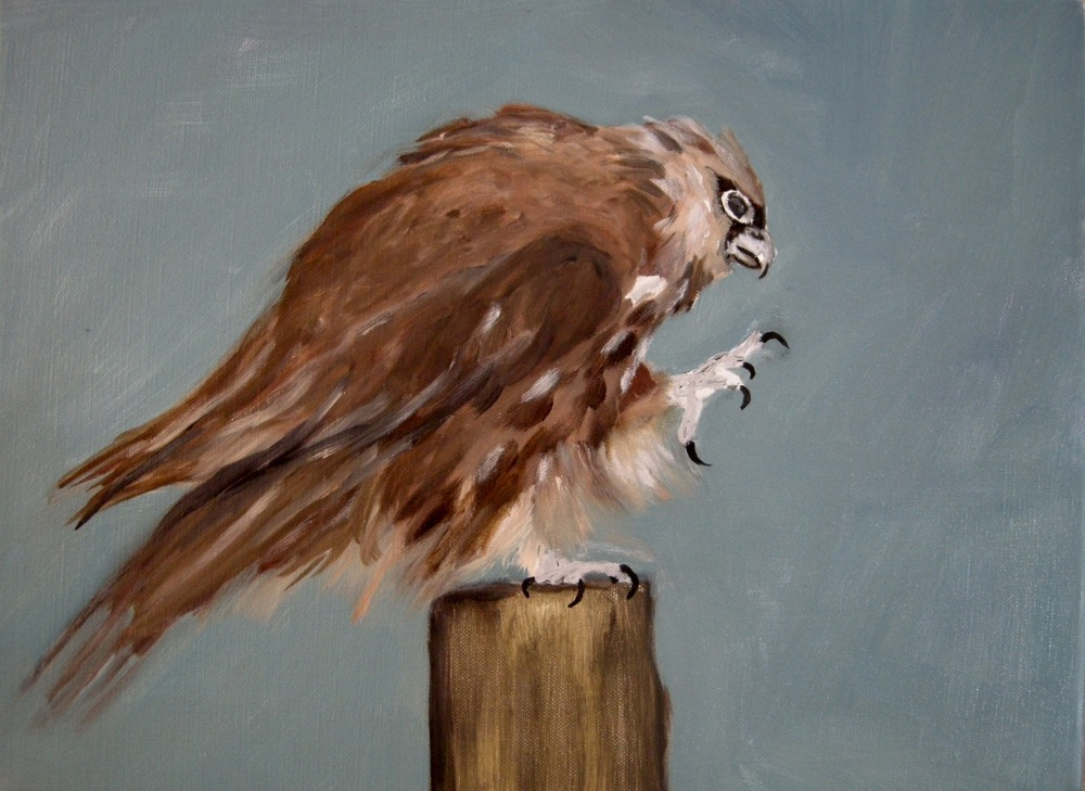 "Goshaw Hawk's Wonder, Oil on Linen, 12"" x 16"", 2016"